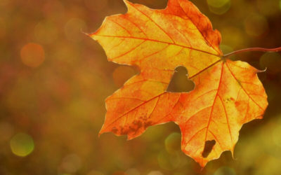 Rutinas Ayurvédicas para el otoño