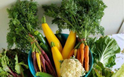 Guiso de vegetales mixtos