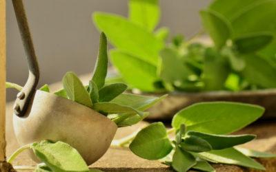 Té de Salvia para los síntomas de la Menopausia.
